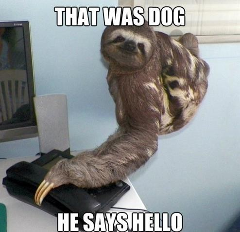 hello this is dog,sloth