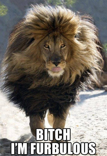 fabulous,mane,lion