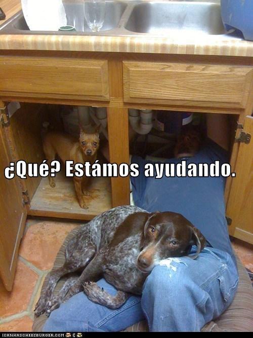 en español - 7304315648
