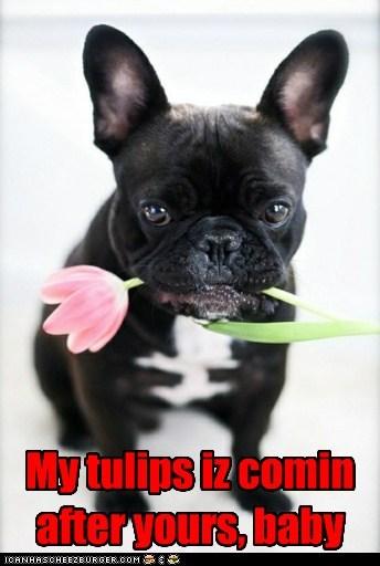 tulips - 7304792320