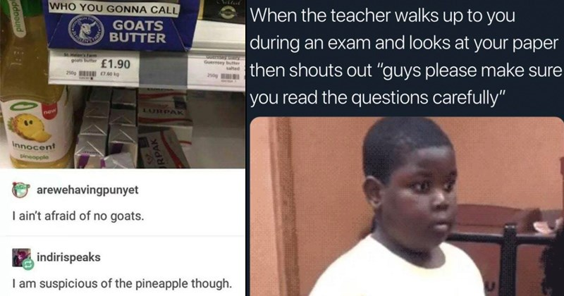 hilarious memes and funny pics