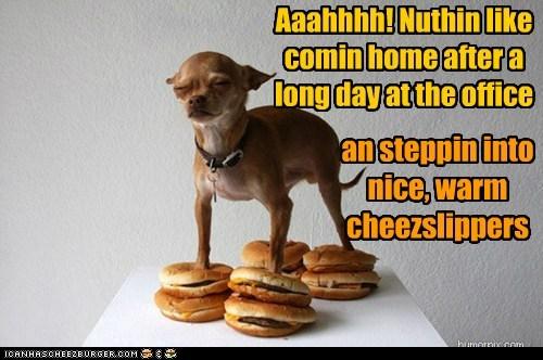 Cheezburger Image 7304972800