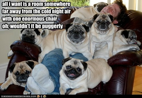 all i want is a room somewhere far away from the cold night air with one enormous chair oh, wouldn't it be puggerly