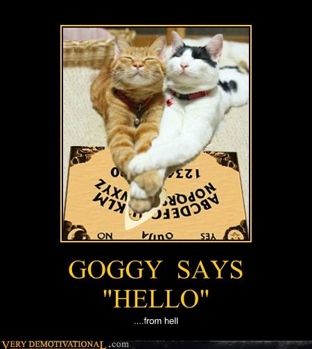 "GOGGY  SAYS  ""HELLO"""