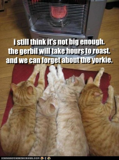 i still think it's not big enough. the gerbil will take hours to roast. and we can forget about the yorkie.