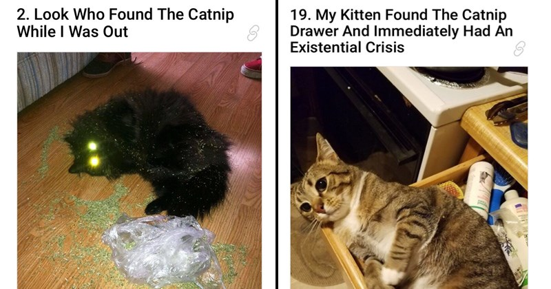 cover image about Catnip affecting cats