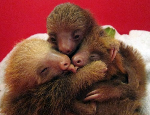 group hug,sloths