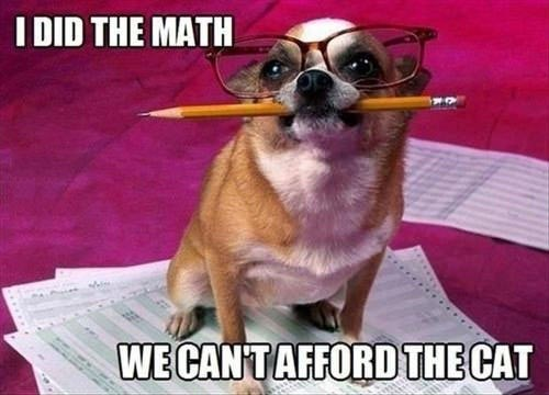 cat math dogs - 7310272768