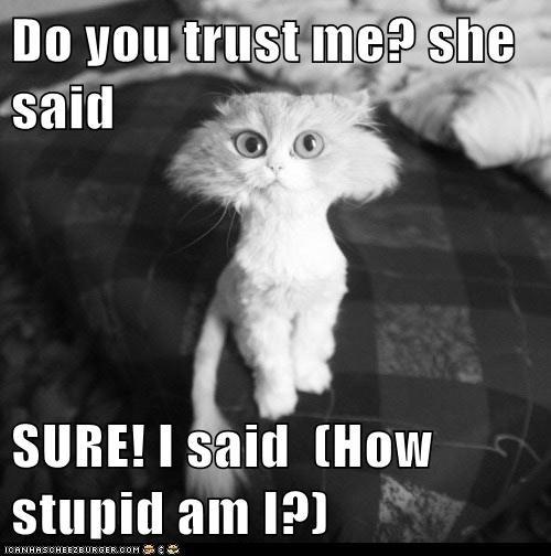 Do You Trust Me She Said Sure I Said How Stupid Am I Lolcats