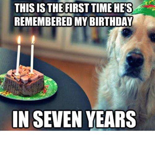 birthday dog years - 7311215616
