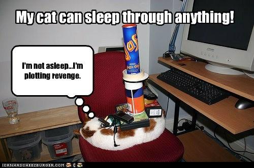 My cat can sleep through anything! I'm not asleep...I'm plotting revenge.