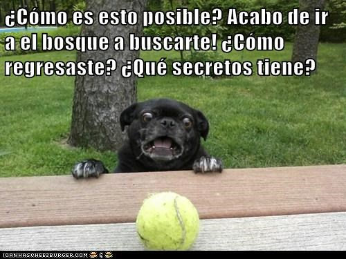 en español - 7311493888