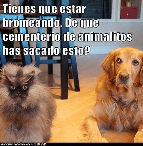 en español - 7311972608