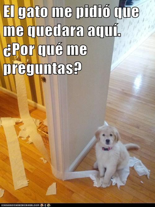 en español - 7312068608
