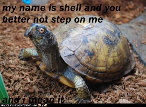 my name is shell and you better not step on me  and i mean it