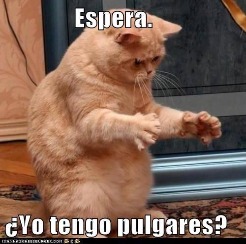 en español - 7312837120