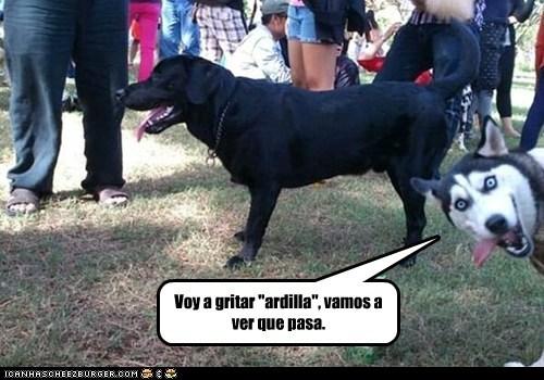 en español - 7313125888