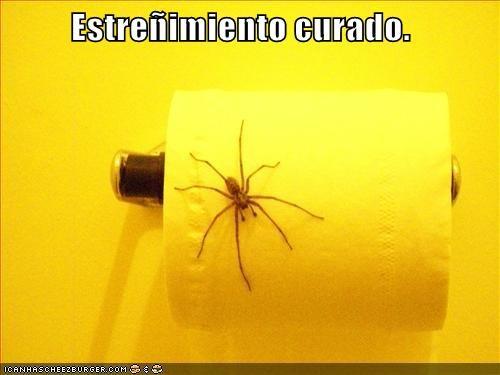 en español - 7313135104