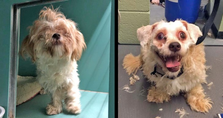 adopt cat dogs transformation adopt don't shop adoption haircut haircuts amazing animal shelter - 7313157