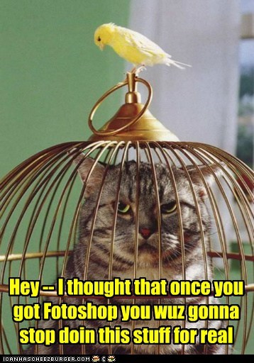 cat,photoshop,cage,bird