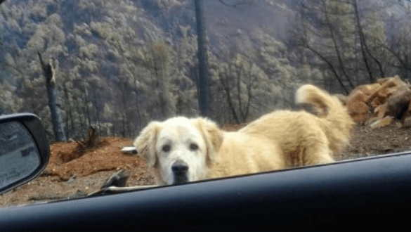 dogs found miracle fire california - 7313413