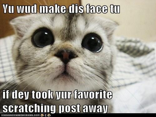 Yu wud make dis face tu if dey took yur favorite scratching post away