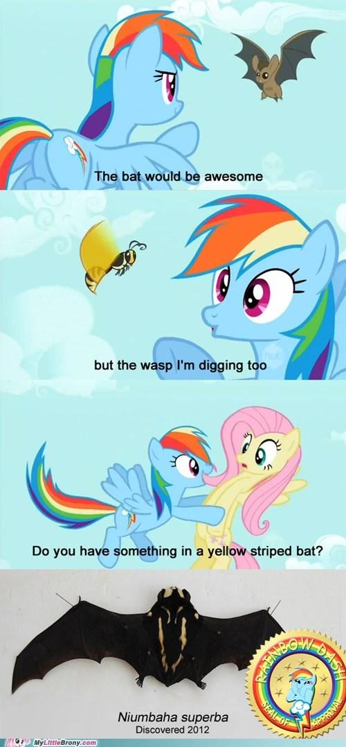 wasps pets bats rainbow dash - 7314189568