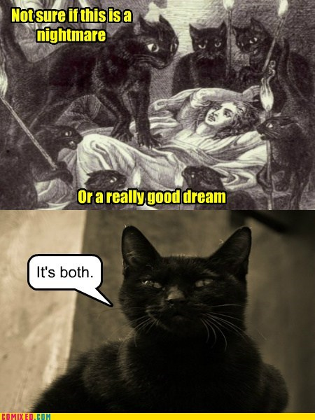 Cats dreams Caturday enigma - 7315441408