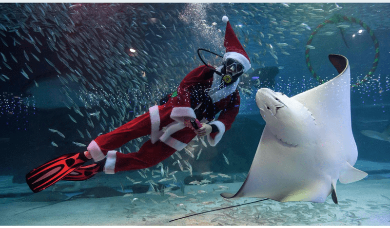 christmas aquarium santa claus scuba diving holidays - 7315461
