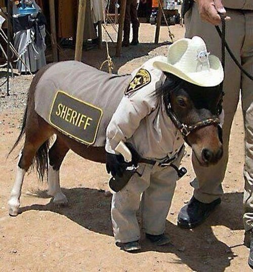 ponies,sheriffs,animals in costumes