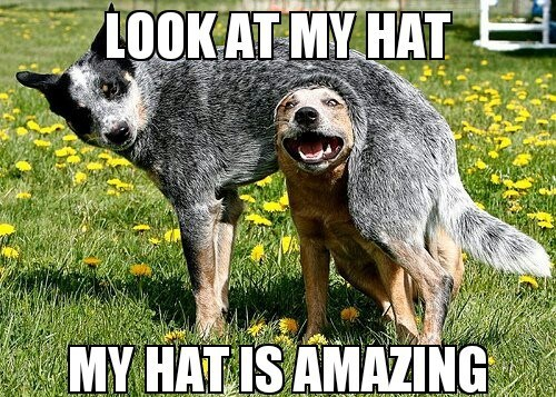 dogs,hats,cute
