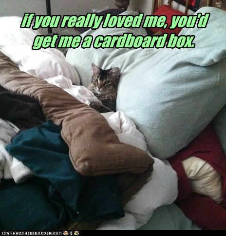 if you really loved me, you'd get me a cardboard box.