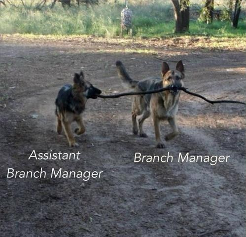 dogs,managers,sticks