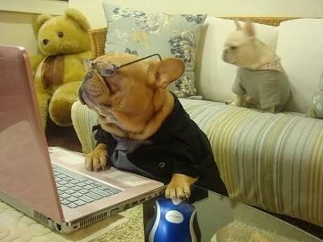 daww dogs computers - 7316458240