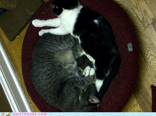 cheese cuddle sleeping - 7317118208