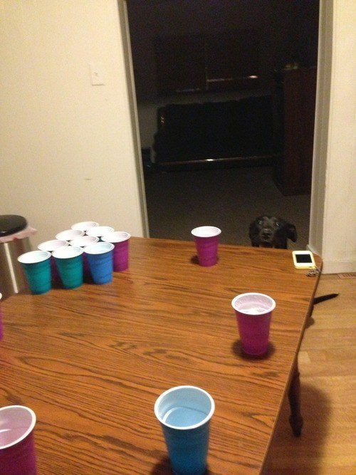 beer pong,next game,dogs