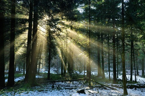Forest sunrise winter