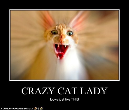 CRAZY CAT LADY looks just like THIS