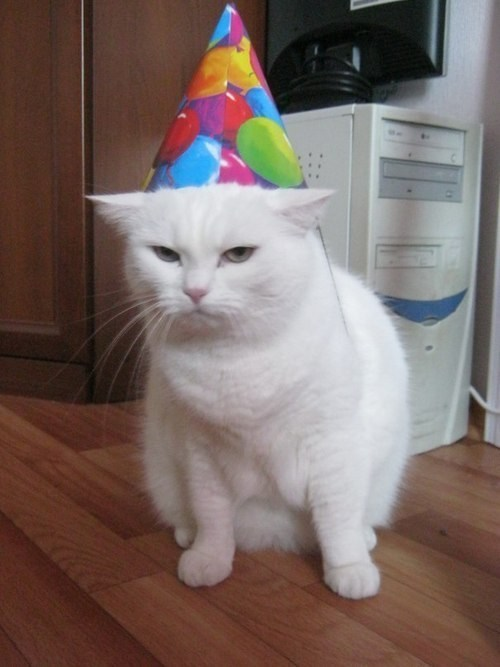 white cat wearing colorful party hat looking angry