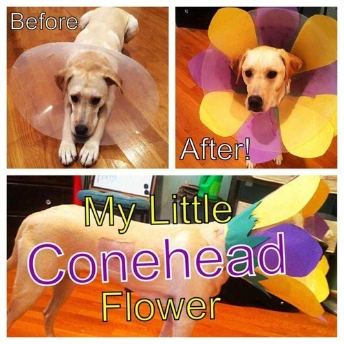 cone of shame,cute,Flower