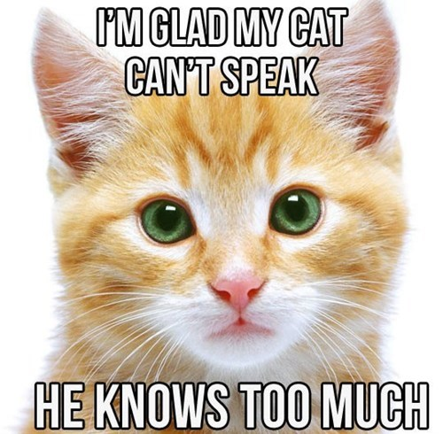 speaking,Cats