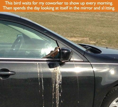 poop birds cars monday thru friday g rated - 7322405632