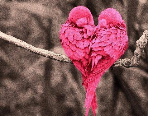 birds heart - 7322626560