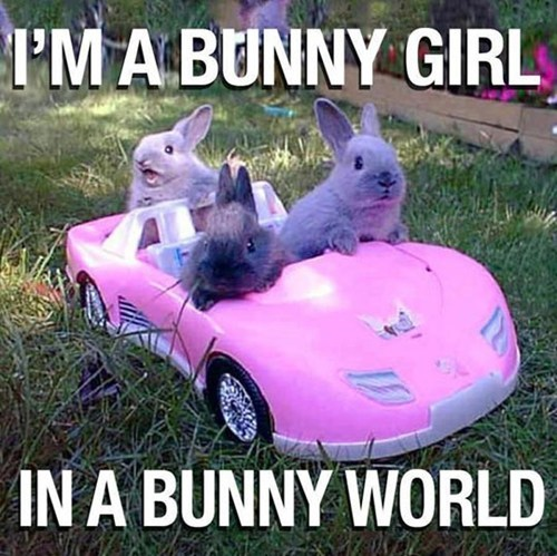 barbie girl,bunny