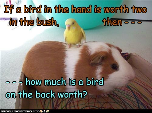If a bird in the hand is worth two in the bush, then - - - - - - how much is a bird on the back worth?