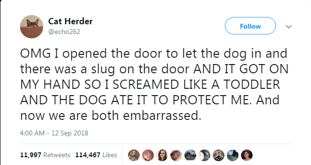 dogs best of dog tweets funny dogs 2018 funny tweets - 7324165