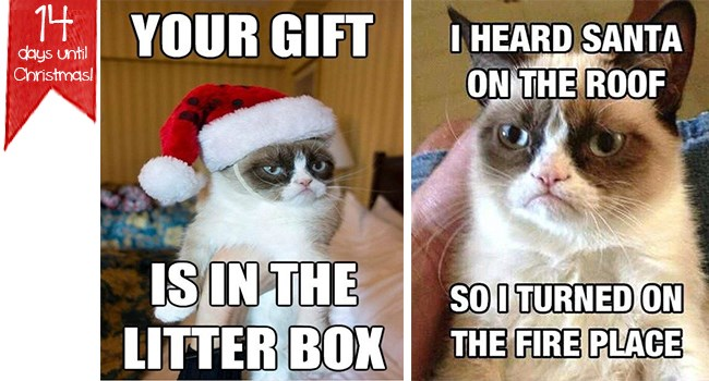 Funny Christmas Memes.I Can Has Cheezburger Christmas Memes Funny Animals