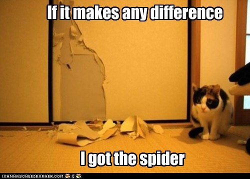 spider wallpaper Cats - 7327500032