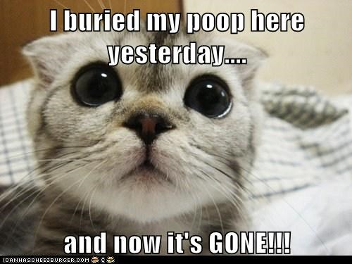 I buried my poop here yesterday.... and now it's GONE!!!