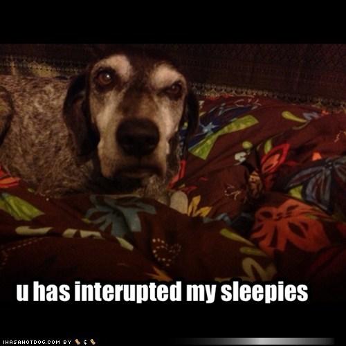 do not want nap sleep - 7329459712